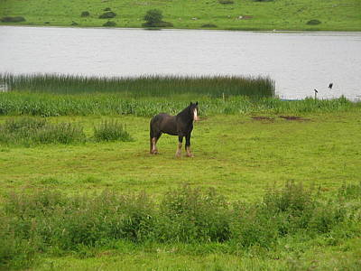 Photograph - Lough Gur Horse by Denise Mazzocco