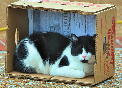 Photograph - Louie In The Box by Jan Amiss Photography