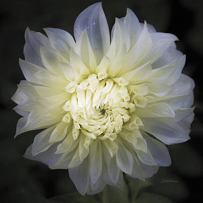 Photograph - Louie Meggos Dahlia by Julie Palencia