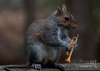 Photograph - Louis The Squirrel by Sandra Clark