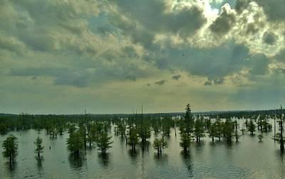 Photograph - Louisiana Aqua Forest by Ed Sweeney