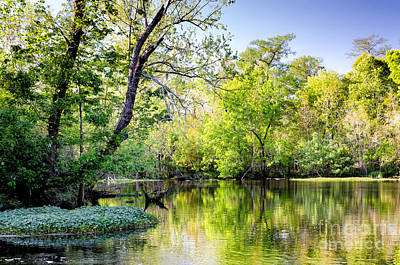 Louisiana Bayou Art Print by Kathleen K Parker