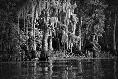 Louisiana Bayou Art Print by Mountain Dreams