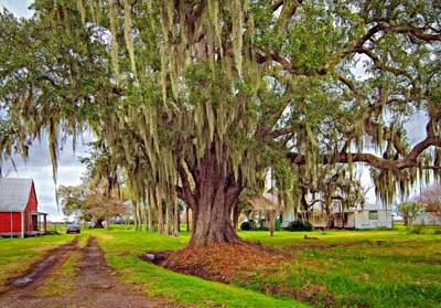 New Orleans Oil Photograph - Louisiana Country Oil by Steve Harrington