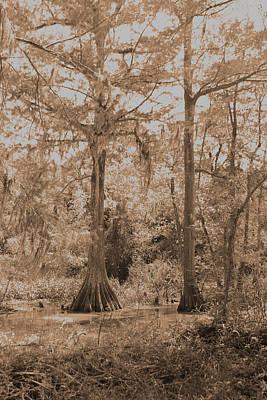 Photograph - Louisiana Cypress Trees by Ronald Olivier