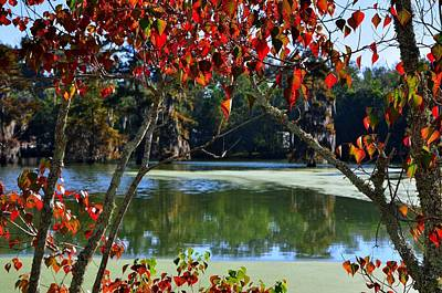 Louisiana Photograph - Louisiana Fall by Charlotte Schafer