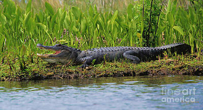 Beers On Tap - Louisiana Gator by Karry Degruise