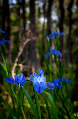 Photograph - Louisiana Iris Field by Andy Crawford