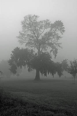 Photograph - Louisiana Live Oak Tree In The Fog by Ronald Olivier