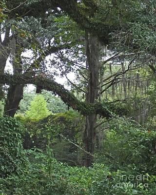 Photograph - Louisiana Lush Oakley Plantation by Lizi Beard-Ward