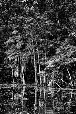 Photograph - Louisiana Swamp 4 by David Doucot