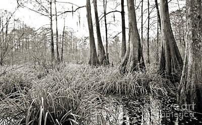 Louisiana Swamp Art Print by Scott Pellegrin