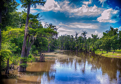 Photograph - Louisiana Swamp by Tammy Smith
