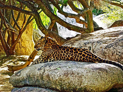 Lounging Leopard In Living Desert Museum In Palm Desert-california Original by Ruth Hager