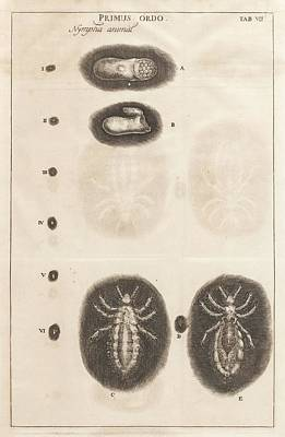 Louse Life Cycle Art Print by King's College London