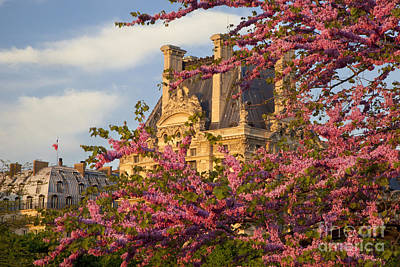 Louvre Blossoms Art Print
