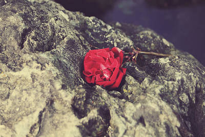 Single Rose Stem Photograph - Love And Hard Times by Laurie Search