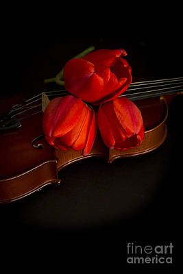 Fiddle Photograph - Love And Romance by Edward Fielding
