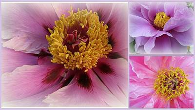 Love And Romance - Peonies Original by Dora Sofia Caputo Photographic Art and Design