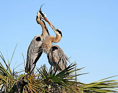 Photograph - Love At The Nest by Ira Runyan