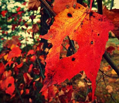 Photograph - Love Autumn  by Sarah Pemberton