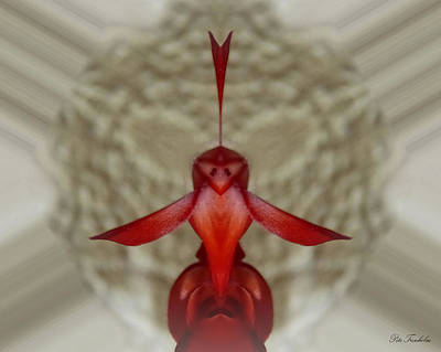 Love Bird Art Print by Pete Trenholm