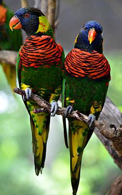Ally Photograph - Love Birds by Ally  White