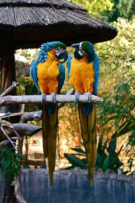 Photograph - Love Birds by Carol Tsiatsios