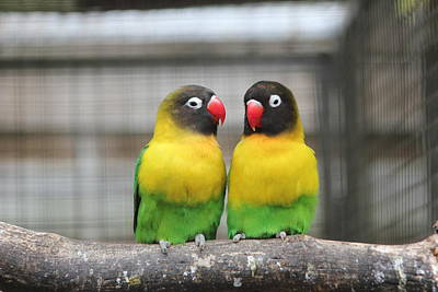 Photograph - Love Birds by Kerry Lapcevich