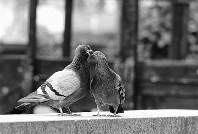 Photograph - Love Birds by Paul Watkins