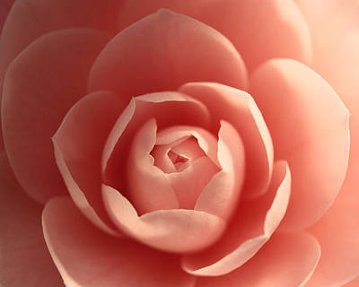 Pink Camellia Photograph - Love .... Expanding by Connie Handscomb