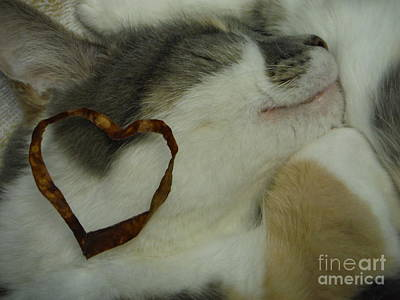 Of Calico Cat Photograph - Love For The Calicos  by Paddy Shaffer