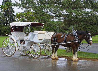 Rainy Day Photograph - Love Goes Together Like A Horse And Carriage by Linda Phelps