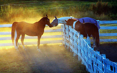 Photograph - Love In Kentucky by Lily K