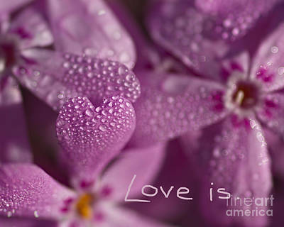 Photograph - Love Is ... by Colette Panaioti