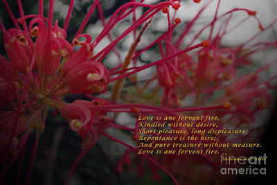 Pure Pleasure Photograph - Love Is Ane Fervent Fire by Cassandra Buckley