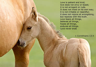 Animals Royalty-Free and Rights-Managed Images - love is gentle love is kind Horse and colt by Mark Duffy