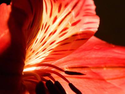 Love Is In Bloom Print by Tara Miller
