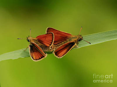 Love Is In The Air Art Print by Inspired Nature Photography Fine Art Photography
