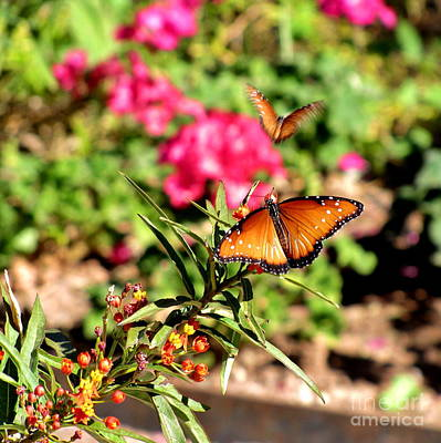 Queen Butterfly Photograph - Love Is Like A Butterfly by Marilyn Smith