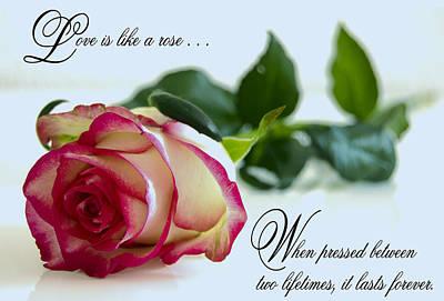 Love Is Like A Rose . . . Art Print