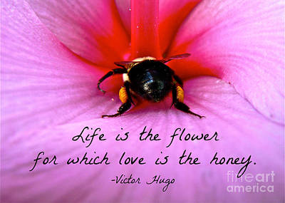 Photograph - Love Is The Honey Of Life by Jean Wright