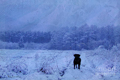 Imagination Photograph - Love Lab Evening Snow by Vin Kitayama