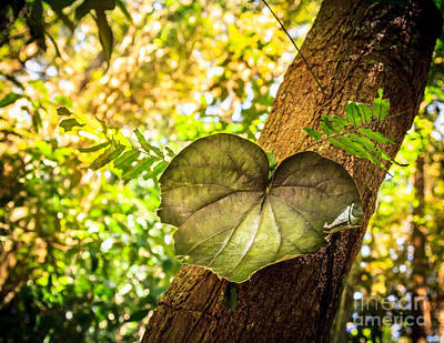 Photograph - Love Leaf by Peta Thames