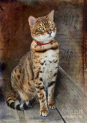 Photograph - Love Me Asian Leopard Cat by Barbara McMahon