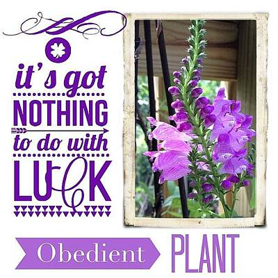 Love My #obedientplants When They Art Print