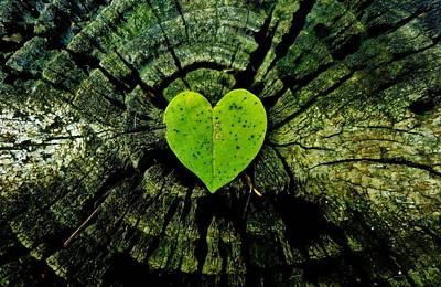 Photograph - Love Nature  by Sarah Pemberton