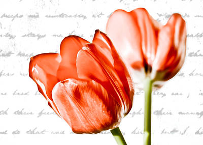 Tulips Photograph - Love Notes by Cari Madsen