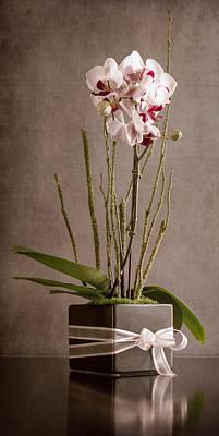 Love Orchid Art Print by Purple Moon
