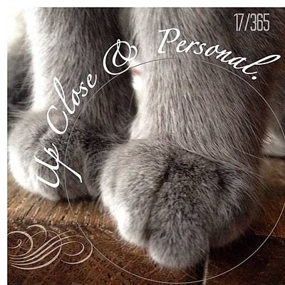 Sweet Photograph - Love #pixie's #paws They Are Just Too by Teresa Mucha